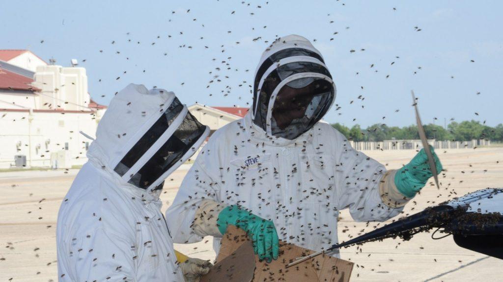Böcek ilaçlama porfesyonel ve kurumsal çözümler için arayın. 0212 709 16 70.