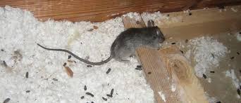 Yaşam alanınızda fare olduğundan mı şüpheleniyorsunuz? Bizi 0212 709 16 70 numaralı telefondan arayın.