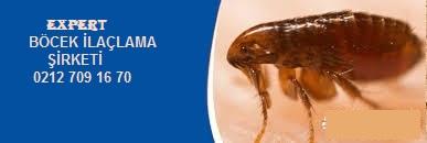 Böcek İlaçlama Nasıl Yapılmalı? sorusuna şöyle cevap verebiliriz.